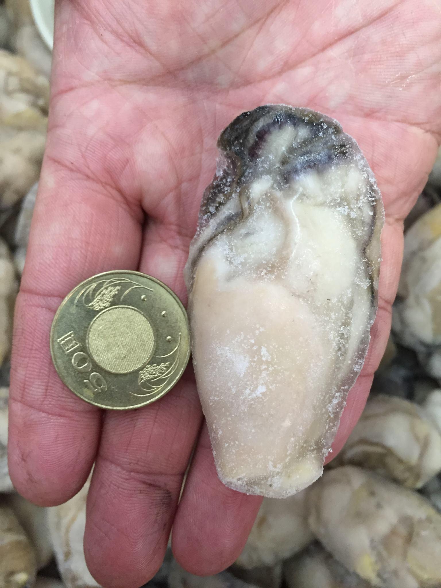 超大顆 廣島新鮮牡蠣肉 500g