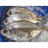 野生肉魚(3-4隻)