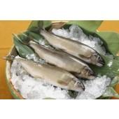 母香魚~保證有蛋.5-6隻
